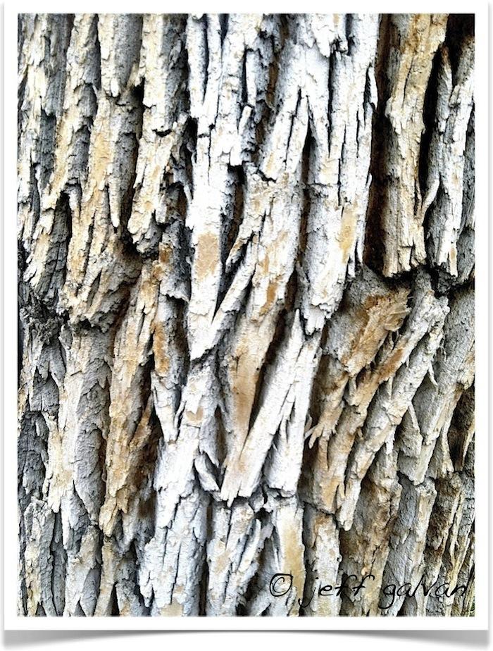 Ash Wood Bark ~ Green ash tree bark boulder care pruning