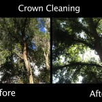 Crown Cleaning