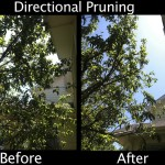 Directional Pruning - Before & After