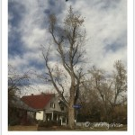 Dynamic Tree Cable System - Silver Maple