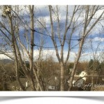 Safety Tree Cabling Boulder Colorado