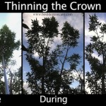 Thinning the Crown