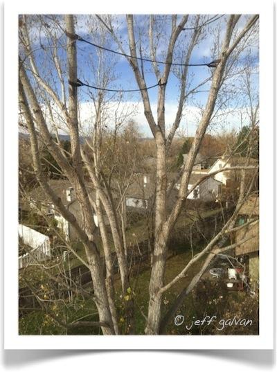 Tree Cabling Boulder Colorado