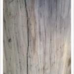 black walnut - drawknife (after)