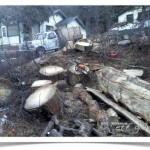 chainsaw milling site on hillside
