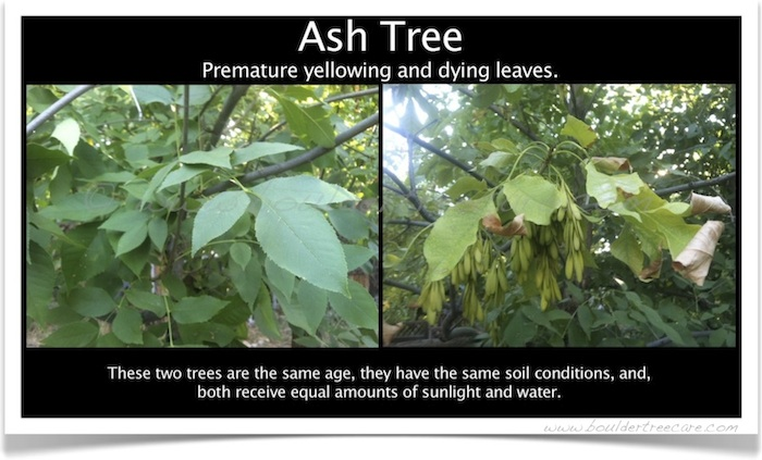 Diagnosis and treatment of disease, illness and problems with trees.
