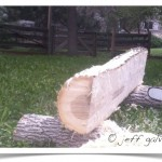 milling ash tree first cut complete