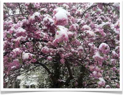 Spring Tree Pruning Boulder, CO.