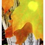 sugar maple leaf margins