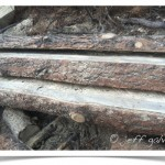 thick milled planks from dead pine tree