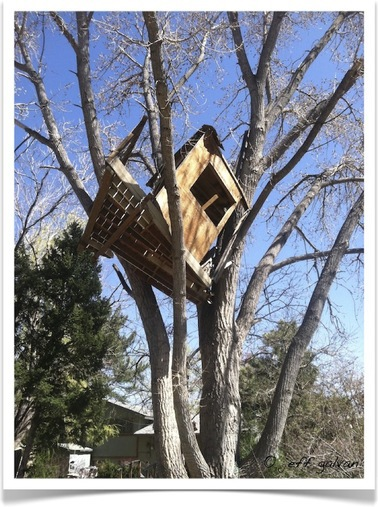 tree-house-removal-boulder-co-